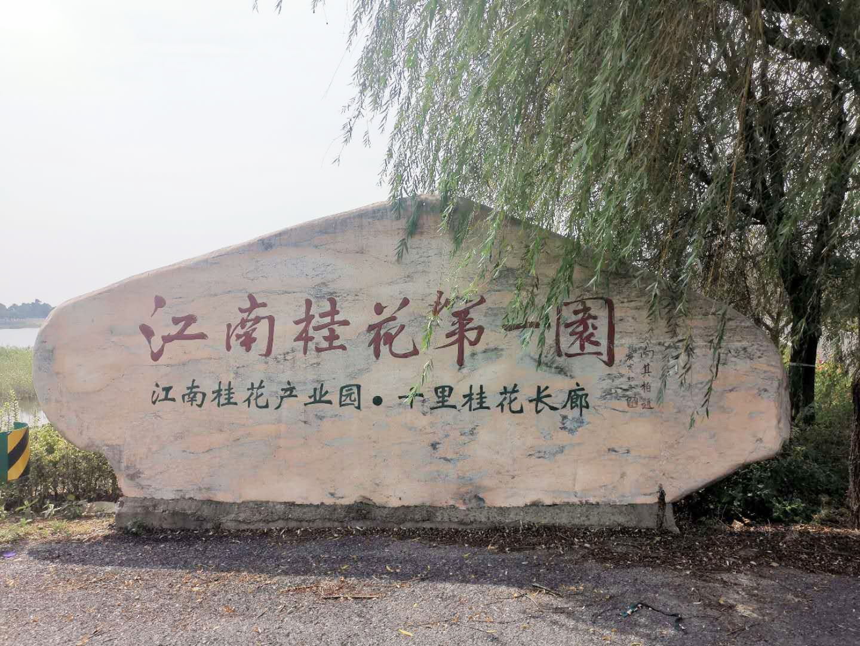 【走向我们的小康生活】江苏溧阳上兴镇:护得青山好,财源滚滚来图片