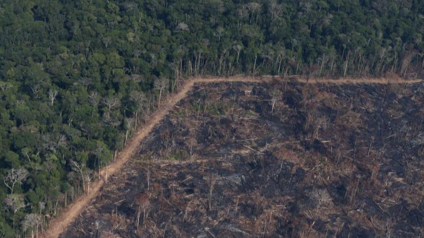 巴西副总统:政府将致力于打击破坏雨林的犯罪行为