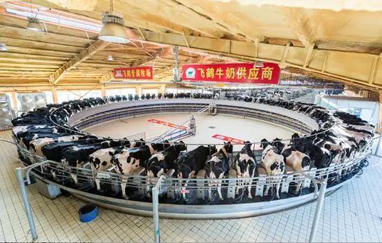 顺应行业趋势 飞鹤拟入主原生态牧业把控高品质奶