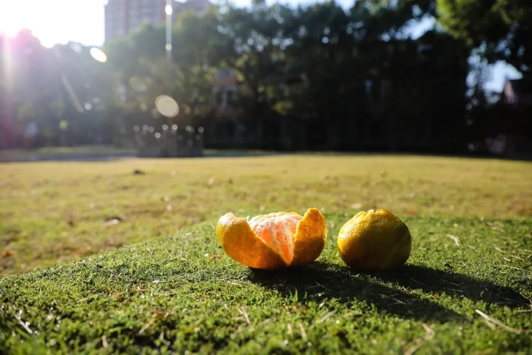 """两个橘子皮的上理""""流浪记""""……"""