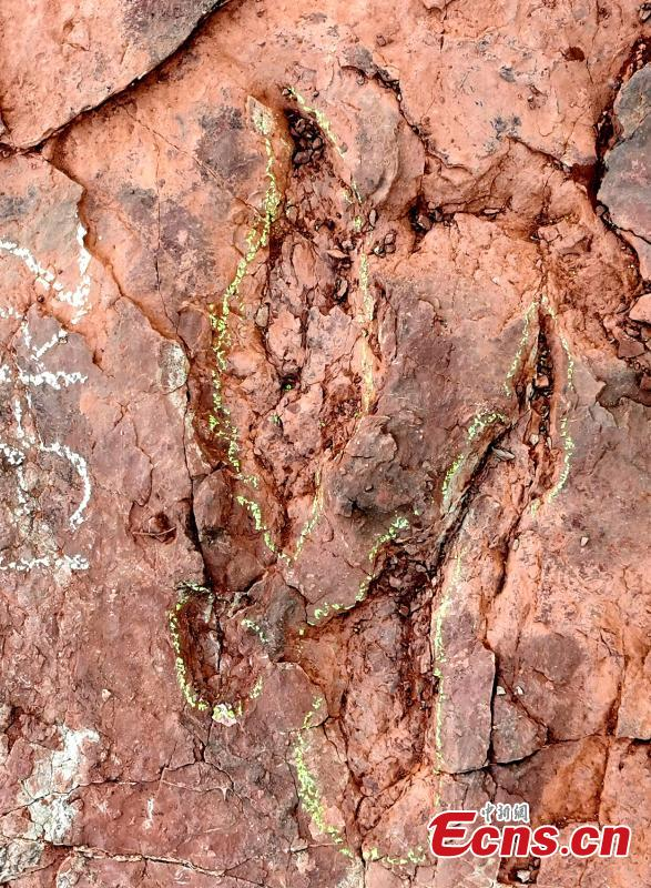 A footprints left by large bird-like Deinonychosauria was discovered in Shanghang County, east China's Fujian Province, Nov. 10, 2020. (Photo: Shanghang County, Fujian Province)