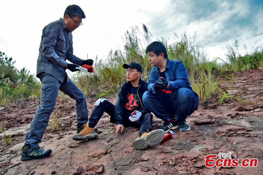 Paleontologists studying dinosaur footprints discovered in Shanghang County, east China's Fujian Province, Nov. 10, 2020. (Photo: Shanghang County, Fujian Province)