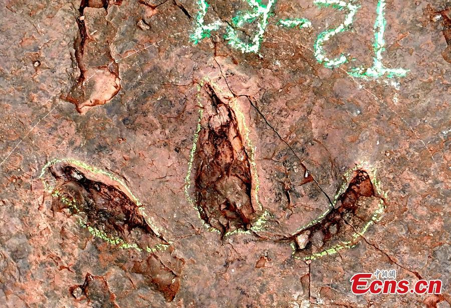 A carnivorous theropod footprint was discovered in Shanghang County, east China's Fujian Province, Nov. 10, 2020. (Photo: Shanghang County, Fujian Province)