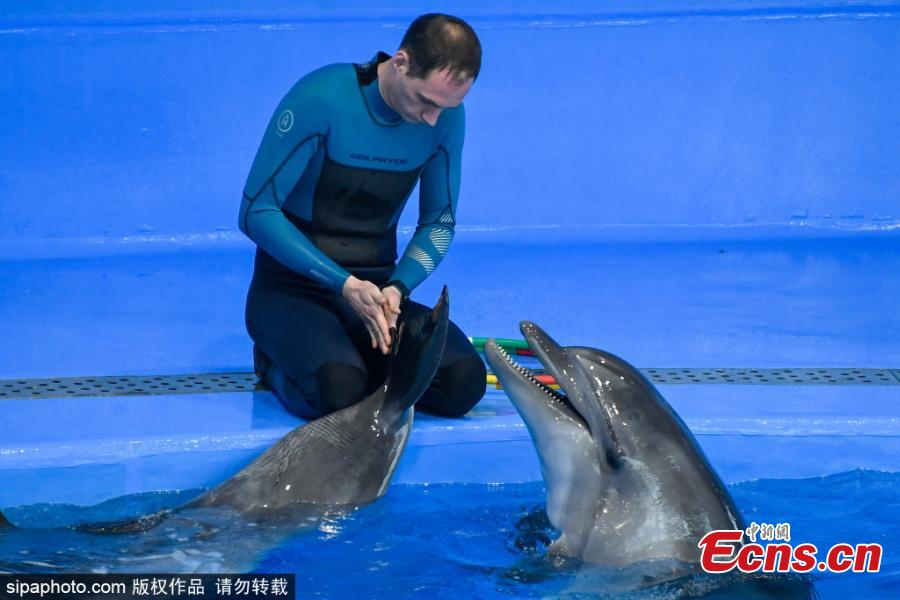 <p>A trainer instructs dolphins during an open training session in the dolphinarium at the Okean medical centre in Vladivostok, Russia, Jan. 12, 2021. (Photo/Sipaphoto) <br><br>  The Okean medical centre has a wide range of health resort facilities, including mud baths, a physiotherapy department, a hydrotherapy department, a seawater pool, a gym, healthy meals, and hotel accommodation. At the beginning of 2021, the dolphinarium started to offer a new service, dolphin therapy, that includes a programme of correction and rehabilitation. The dolphinarium is currently home to four Black Sea common bottlenose dolphins named Tor, Dani, Ruta and Gela.</p>