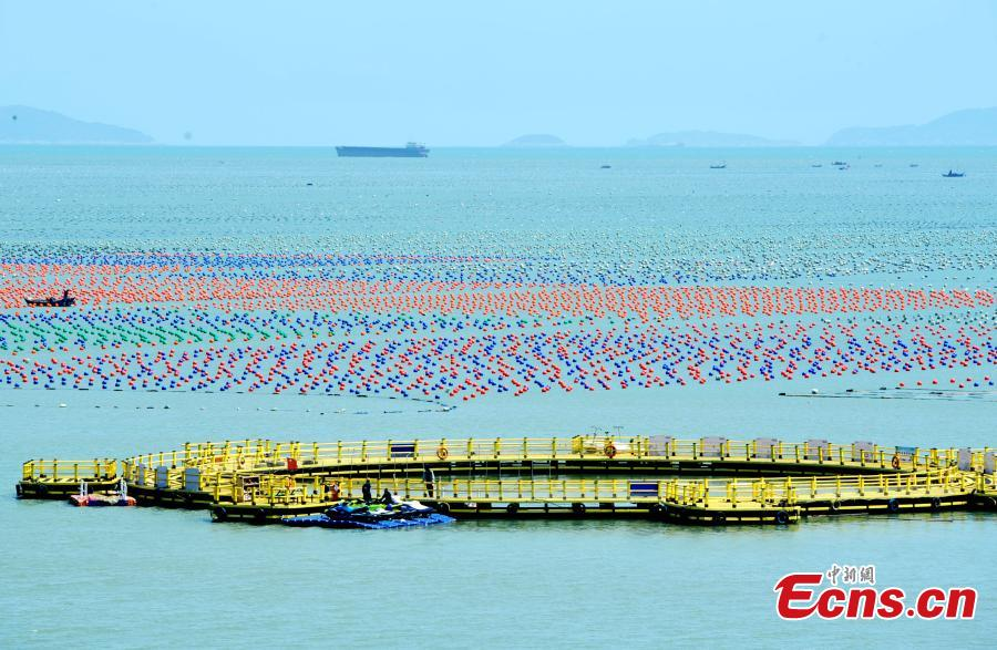 <p>Aerial photo taken on April 8, 2021 shows aquaculture floats at a sea farm in Lianjiang County, Fuzhou City, south China's Fujian Province. With a sea area of more than 3000 square kilometers and 47 natural harbors, the county leads the domestic total output of aquatic products. (China News Service/Zhang Bin)</p>