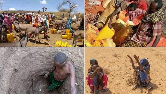 埃塞俄比亚索马里州旱情严峻 超200万人亟需援助