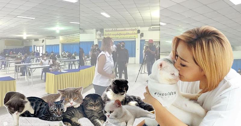泰国禁毒委为毒贩宠物猫找到新主人