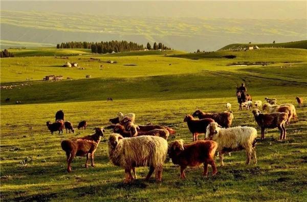 众牧荣获内蒙古羊产业品牌大使,吹响乡村振兴号角