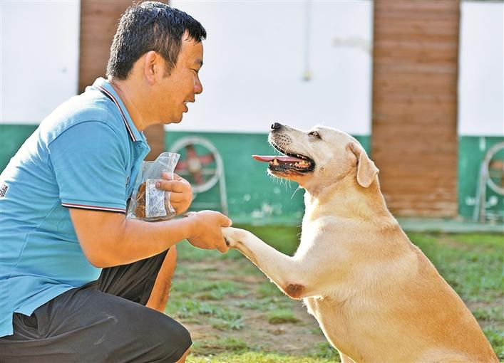 狗狗上训练班都学些啥?探访多个犬只训练基地 揭开训犬内幕