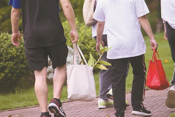 盗采粗叶榕的市民得手后径直离开现场。