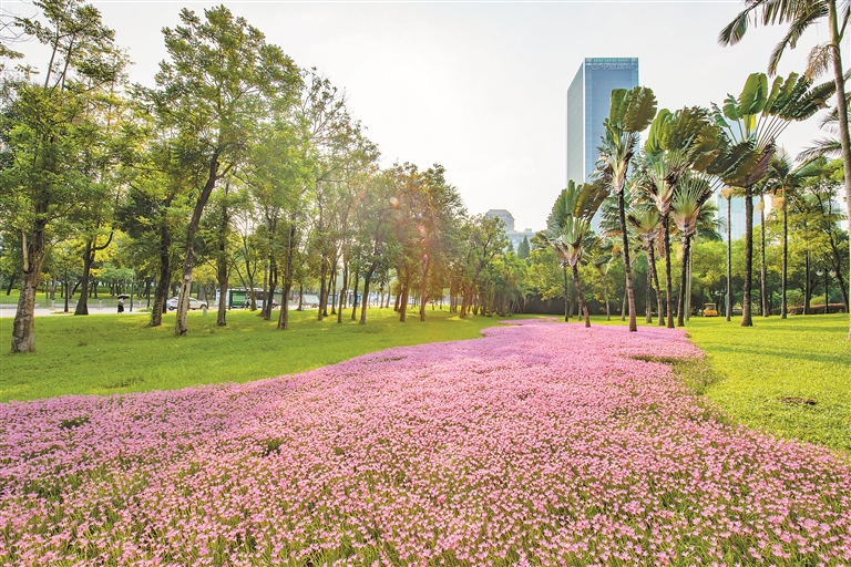 好美!中心公园藏着浪漫花海