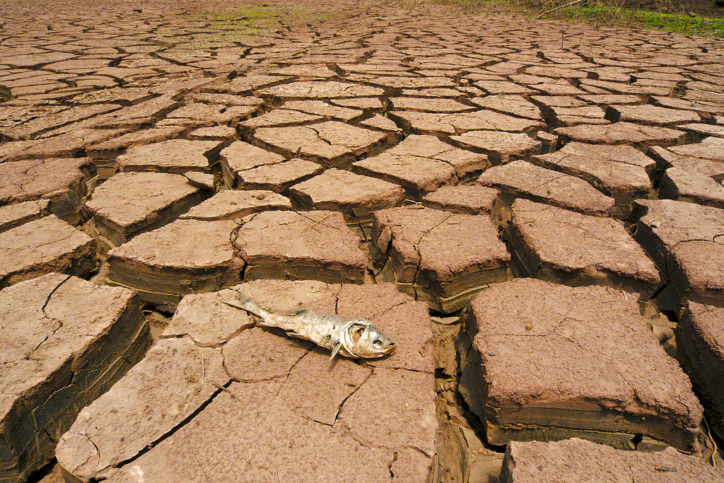 联合国:过去50年 自然灾害造成全球超过200万人死亡