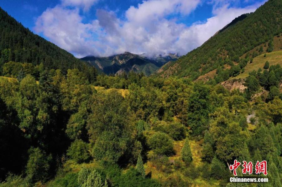 <p>Aerial photo shows the beautiful autumn scenery of Qilian Mountain National Park in northwest China's Qinghai Province, September 16, 2021. (Photo: China News Service/Ma Mingyan)</p>