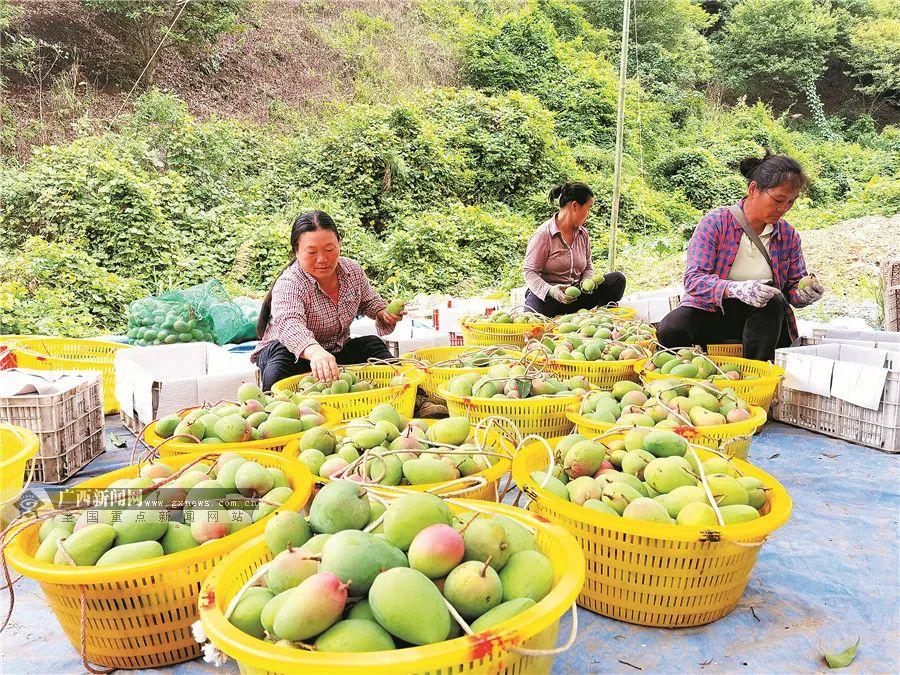 广西再添两个国家地理标志产品保护示范区