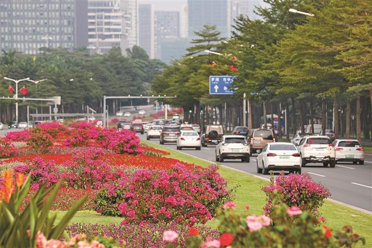 在深南大道中央,鲜花绿植组成花带花海。