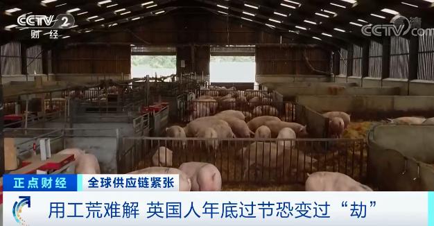 """这个国家,""""用工荒""""难解!养猪场""""猪满为患"""""""