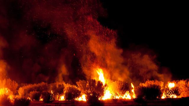 地方新闻精选  香格里拉森林火灾明火扑灭  上海发现首例英国变异新冠病毒病例