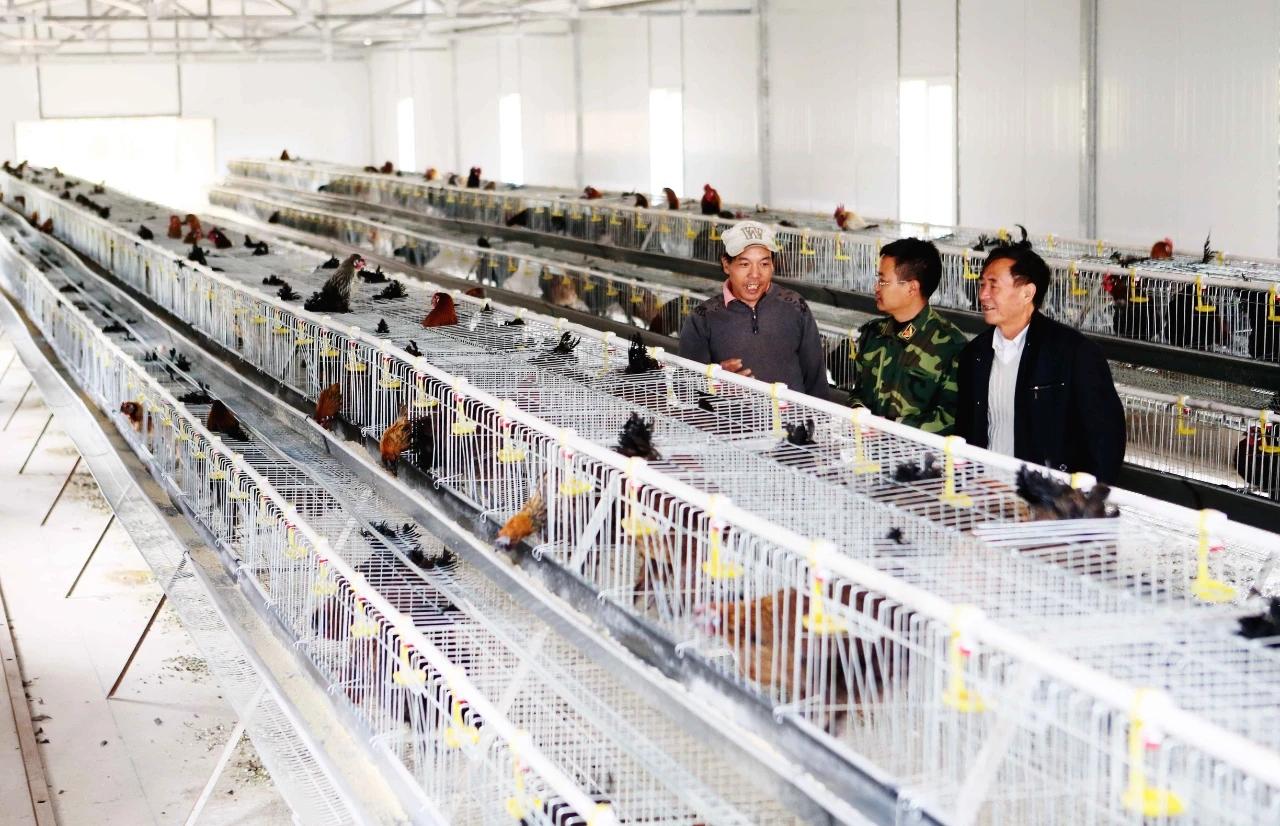 """滇南小耳猪、茶花鸡…云南对47个畜禽品种开启""""遗传资源保护模式"""""""
