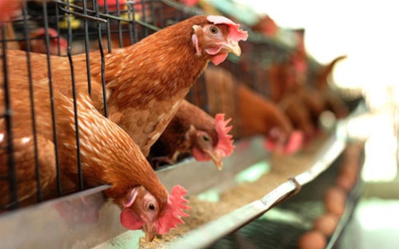 香港暂停波兰部分地区禽肉及禽类产品进口