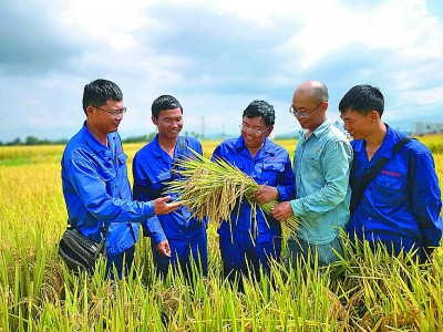 高产之后,让杂交水稻更优质
