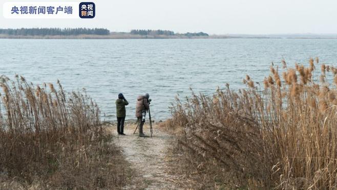 全球数量不足1000只 极危物种青头潜鸭现身苏州昆承湖图片