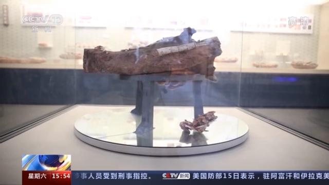 江西赣州:发现一组窃蛋龙孵卵化石 成体、胚胎和蛋窝同时保有