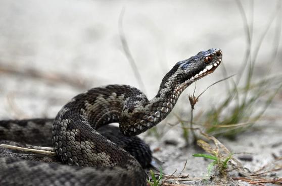 为什么蛇不会中蛇毒?这大概是一个物理问题……