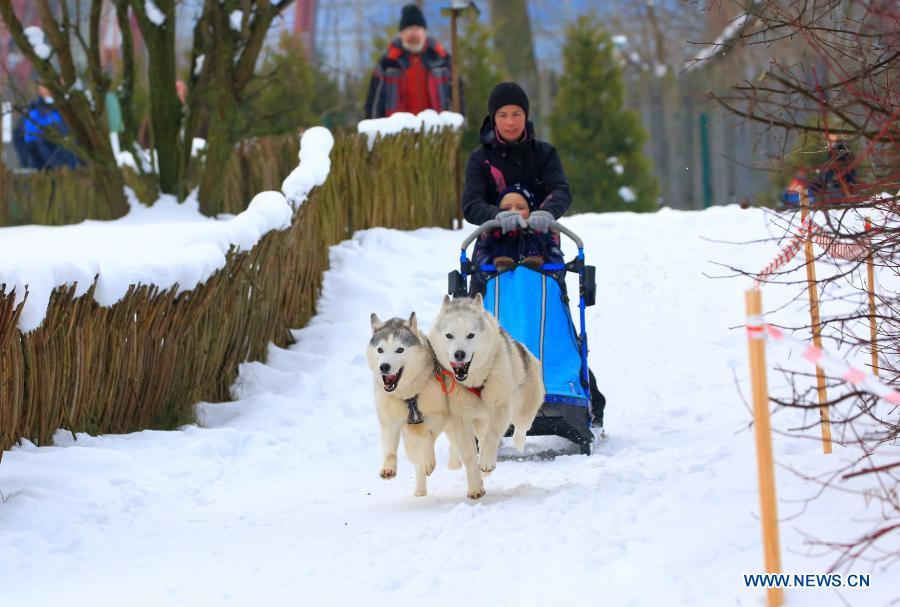 People have fun on sledge in Minsk, Belarus