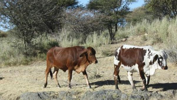 纳米比亚奥希科托省发现口蹄疫病例