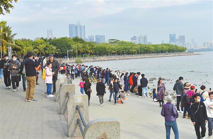 春节期间,深圳湾公园每天游人如织。本栏摄影 深圳商报记者 廖万育