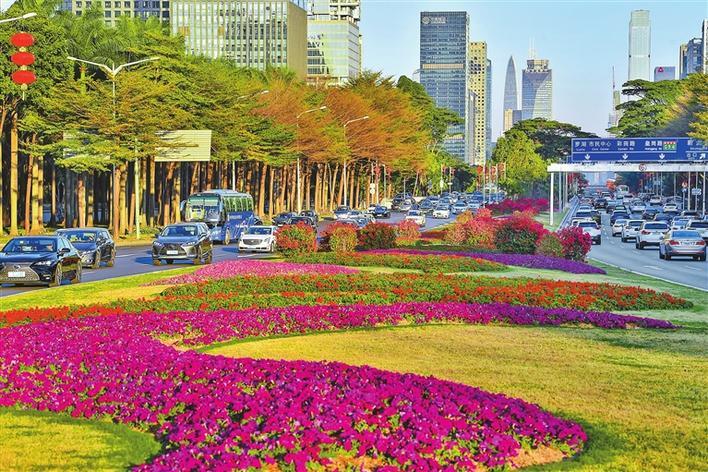 ▲深南大道中间的绿化带花团锦簇。