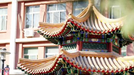 生活无处不中医|春节大吃大喝后,药膳保驾护航图片