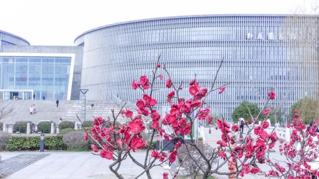 立春 | 春暖花开,送你一份金陵赏春图图片