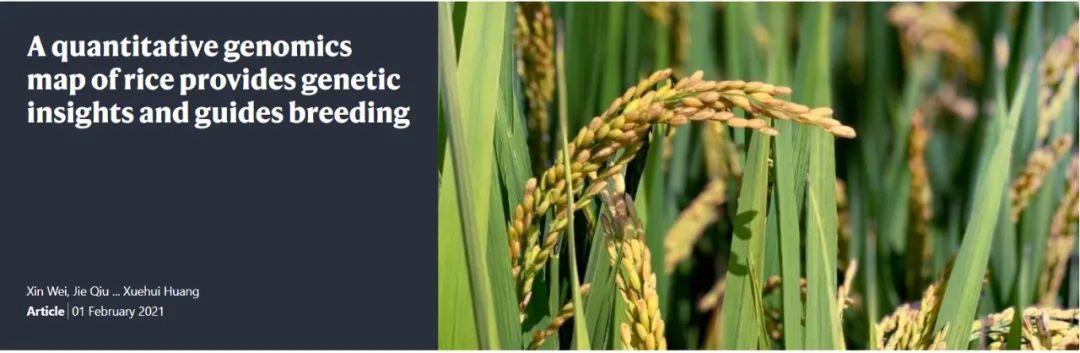 登上《自然》子刊封面!上海师大黄学辉团队在水稻遗传学研究中取得重大突破图片