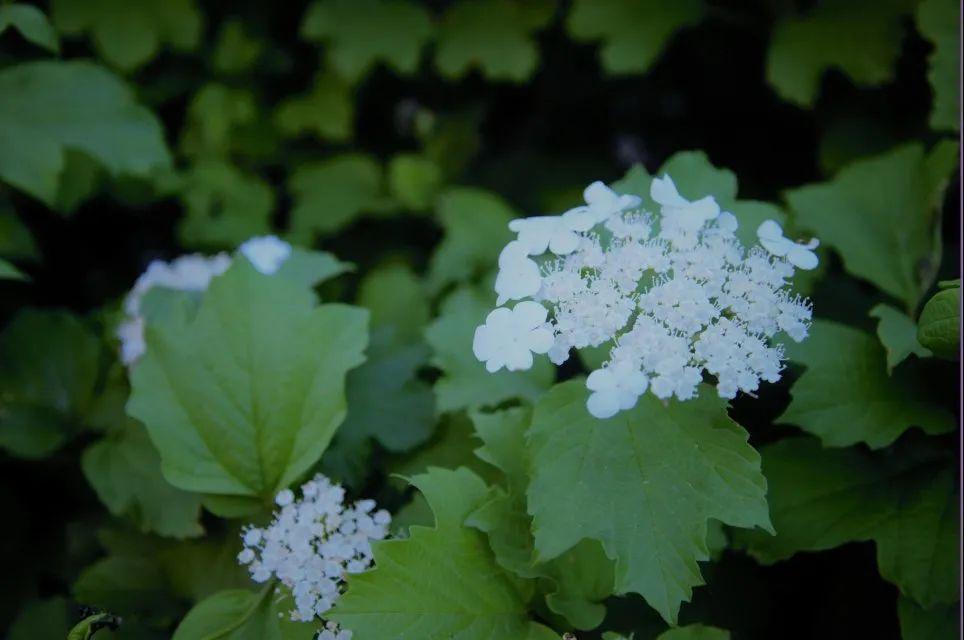 植树节 |拆盲盒 邂逅属于你的绿色天理图片