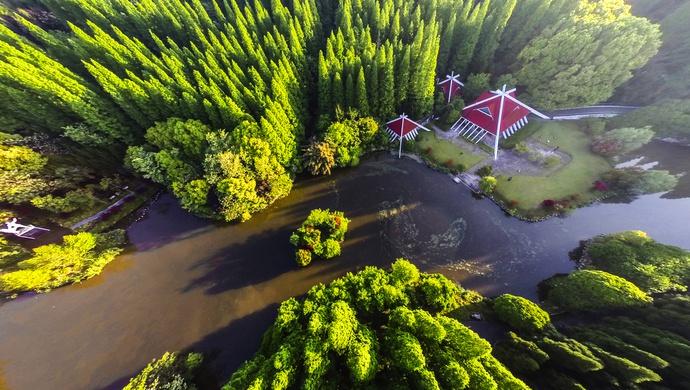 上海第一大岛,有一群人种了30多年的树图片