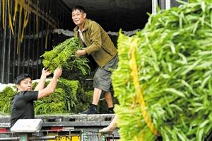 田间务农忙 蔬菜鲜上市图片