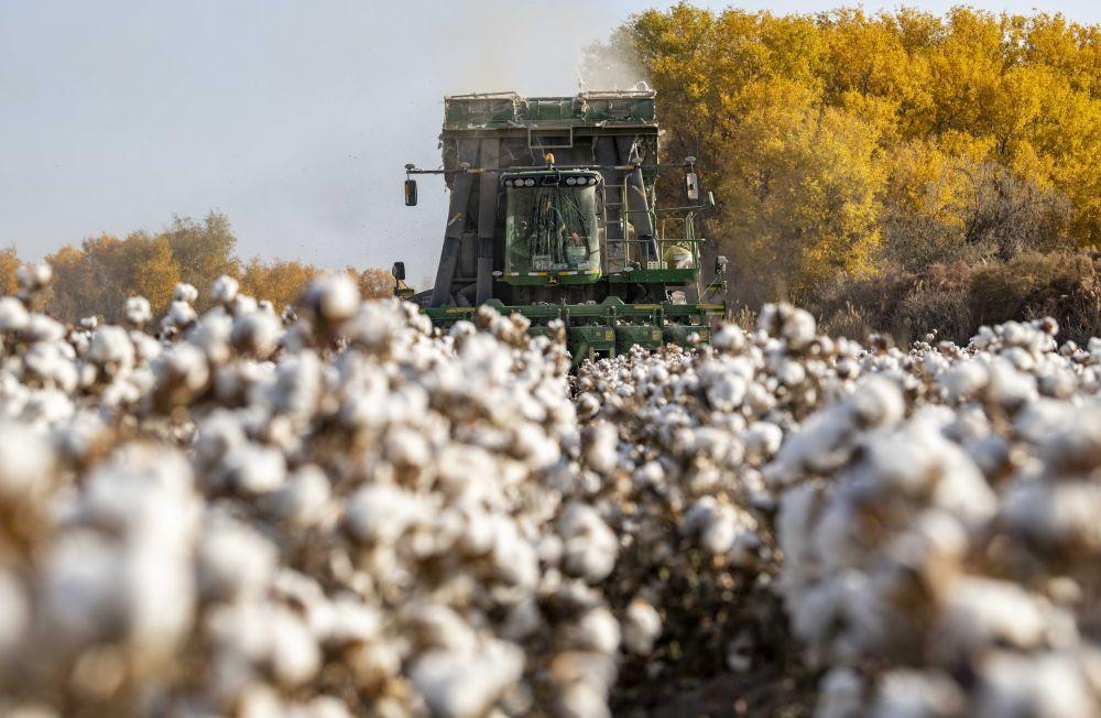 """揭秘:美国如何操纵""""强迫劳动""""议题打压中国棉花企业图片"""