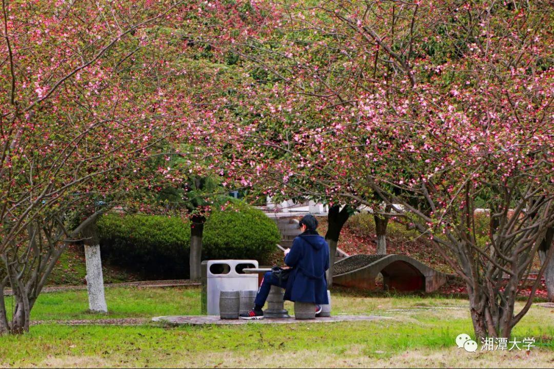 在湘大,与春色撞了个满怀!图片