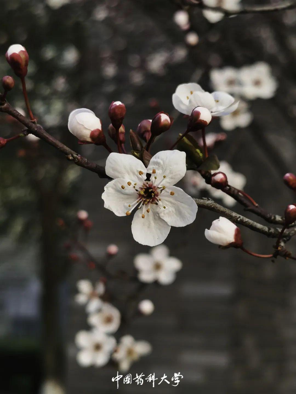 这个春天,我们在药大温暖重逢