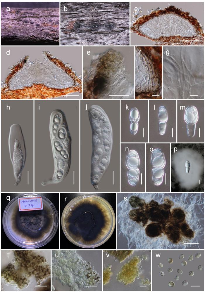 中国科学院昆明植物研究所发现真菌新属