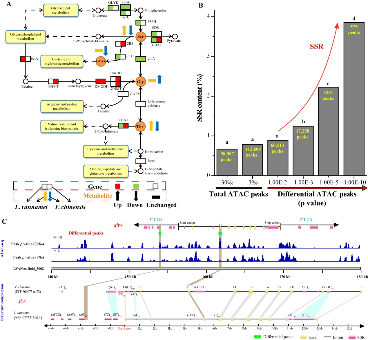 △SSR介入对虾盐度顺应相干基因的表达调控