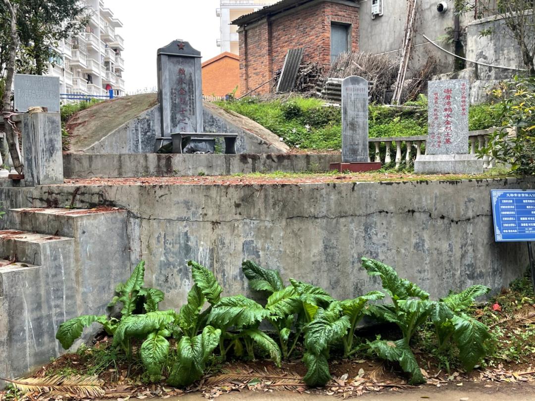 墓前种蔬菜、碑文刻错字……这些烈士墓怎么了?图片