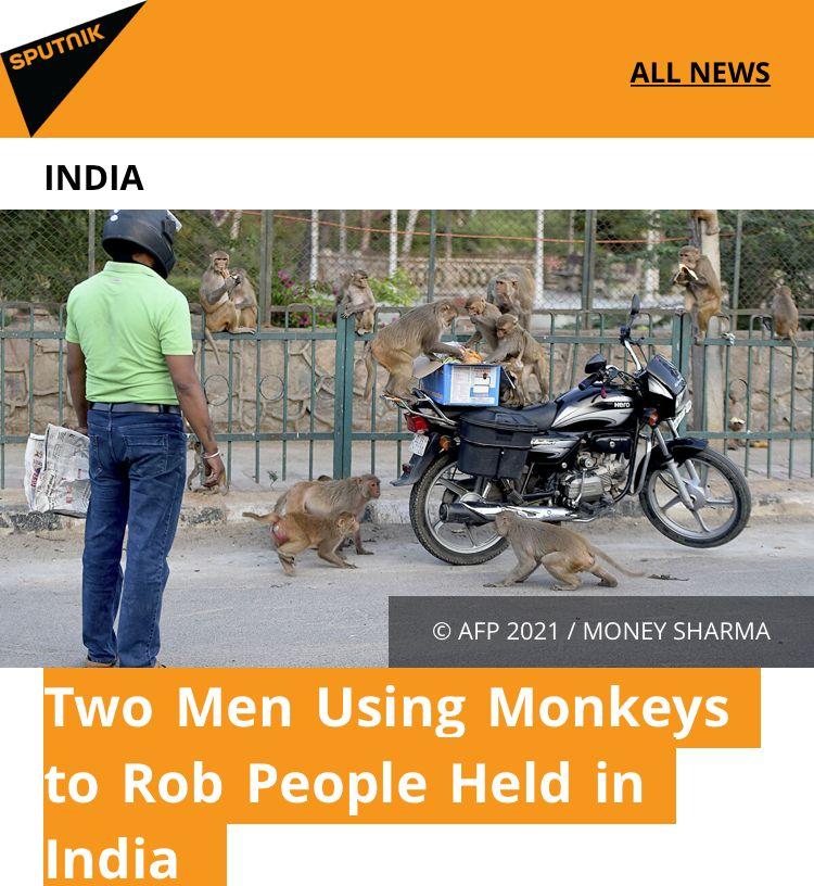 新套路?印度德里两男子利用猴子抢钱被捕