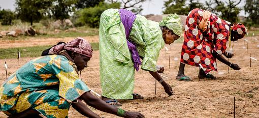 世界粮食计划署:非洲多国面临食物短缺 粮食无法得到保障