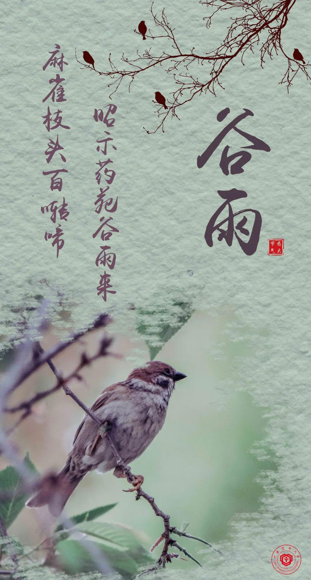 麻雀枝头百啭啼,昭示药苑谷雨来图片
