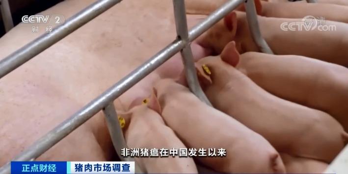 """跌破15元/斤!猪肉价格坐""""滑梯""""!养猪还赚钱吗?"""