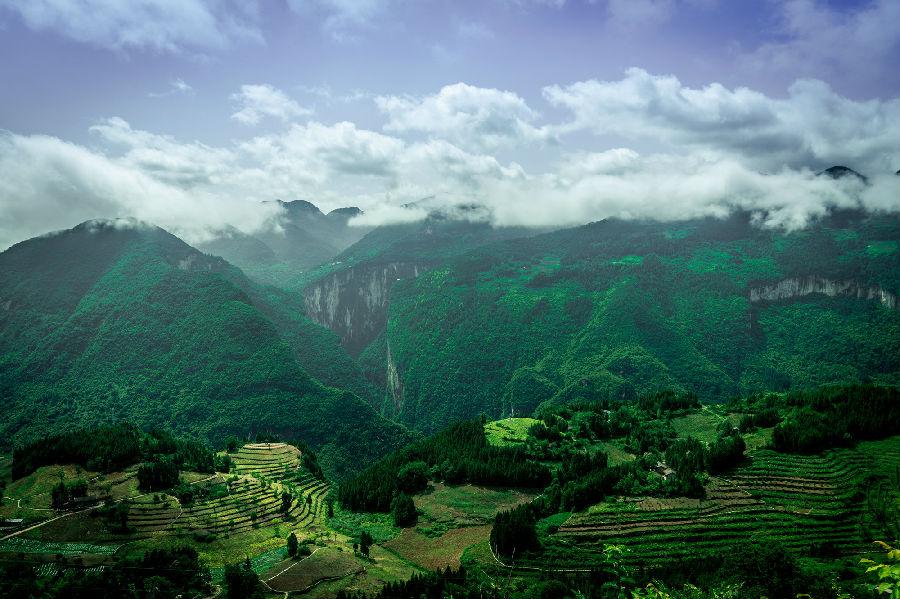 中林集团:加强国家储备林建设 引领林业高质量发展图片