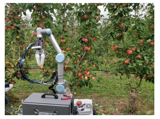 科学家开发苹果采摘机器人 每7秒采摘一个水果