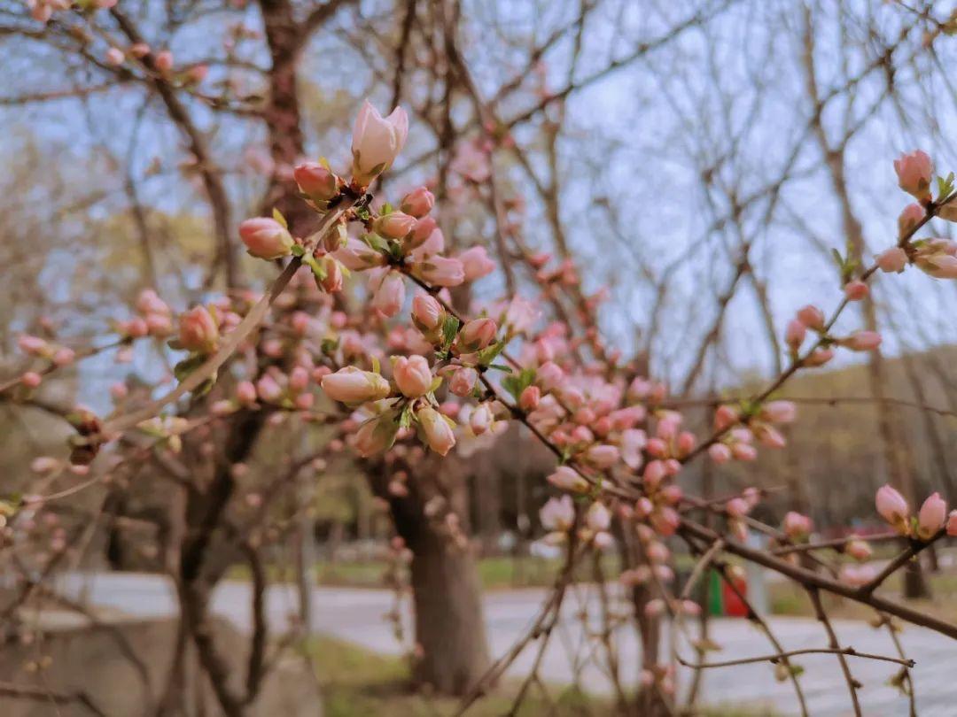 我捉住了东林的春!!!图片